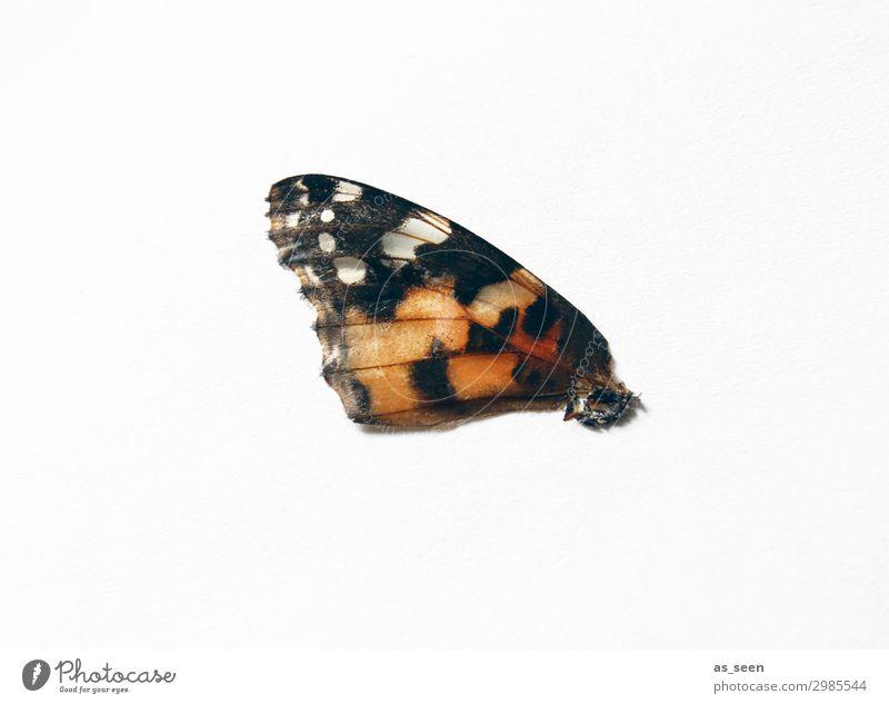 Flügel Schmetterling Schuppen Schmetterlingsflügel Insekt 1 Tier fliegen ästhetisch authentisch exotisch klein natürlich rund braun orange rot schwarz weiß