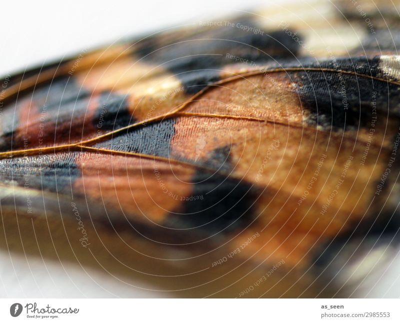 Flügelschlag exotisch Umwelt Natur Tier Schmetterling Insekt Tagpfauenauge Schmetterlingsflügel 1 fliegen ästhetisch authentisch außergewöhnlich nah braun