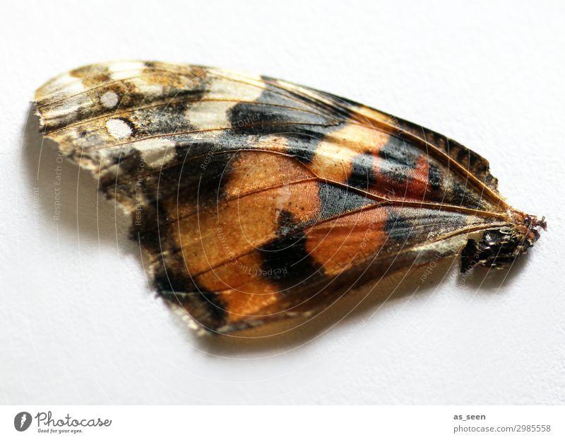 Schmetterlingsflügel Tier Flügel Schuppen liegen ästhetisch authentisch natürlich braun schwarz weiß Gefühle Kreativität Leichtigkeit schön Vergänglichkeit