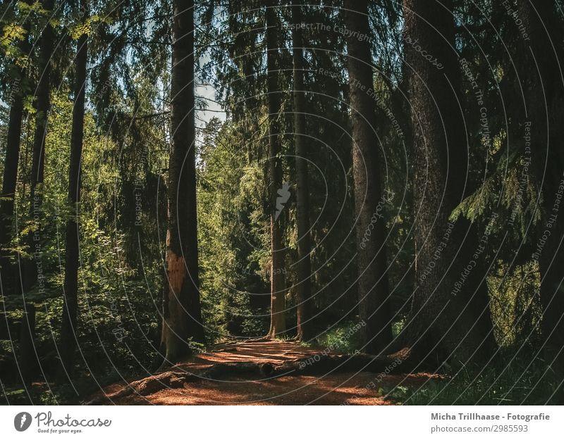 Sonnenstrahlen auf dem Waldweg Ferien & Urlaub & Reisen Ausflug wandern Natur Landschaft Pflanze Himmel Schönes Wetter Baum Erholung natürlich blau braun gelb