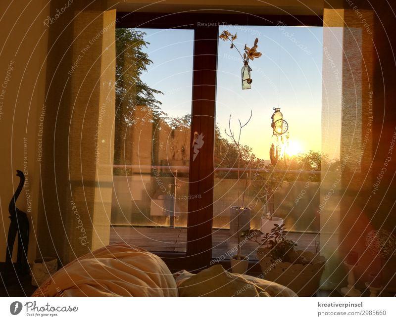 Lass die Sonne rein Pflanze rot Baum Blume Fenster Holz Wärme gelb Frühling Gras orange gold Glas Schönes Wetter schlafen