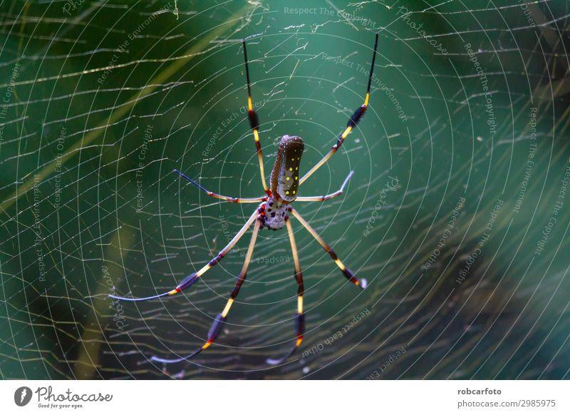 Natur Farbe schön grün Tier wild Park gold gefährlich Fotografie Internet Beautyfotografie Insekt horizontal Falle Spinne