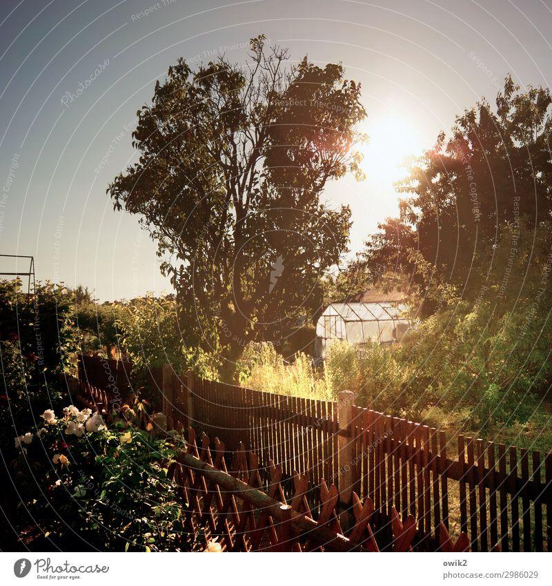 Gewächshausen Umwelt Natur Wolkenloser Himmel Sonne Sommer Schönes Wetter Pflanze Baum Blume Gras Sträucher Rose Blüte Garten Blühend leuchten Zaun