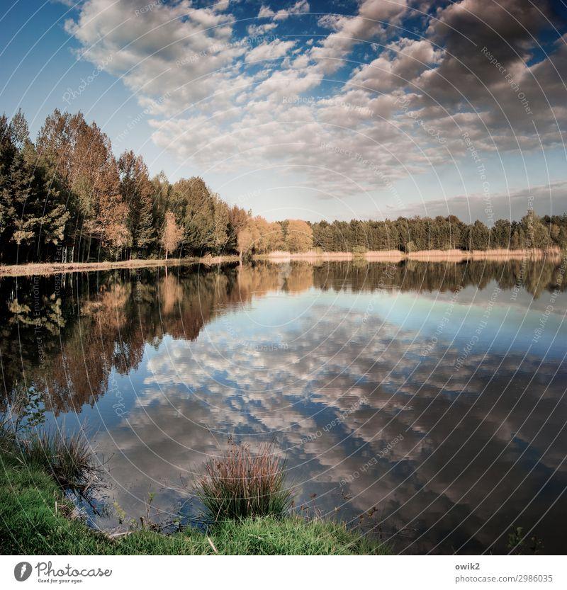 Herbstfrühling Umwelt Natur Landschaft Pflanze Urelemente Wasser Himmel Wolken Horizont Schönes Wetter Baum Gras Sträucher Wald Seeufer Ferne Gelassenheit ruhig