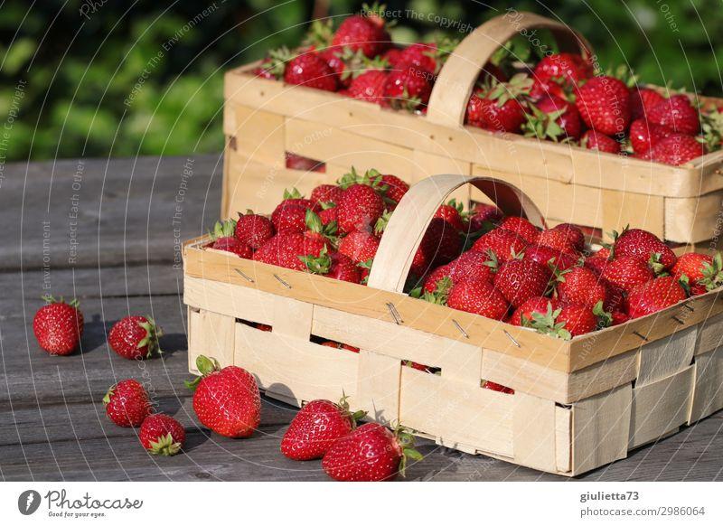 Erdbeer-Traum Sommer Schönes Wetter lecker Erdbeeren Korb Garten frisch Gesunde Ernährung Vegane Ernährung rot Frucht Gesundheit Juni Feldfrüchte natürlich