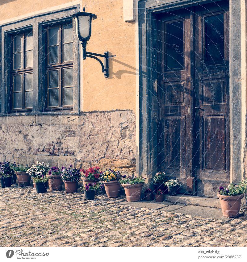 Alter Eingang mit Deko alt Sommer Pflanze Stadt schön Blume Haus Fenster Wärme gelb braun retro Tür Schönes Wetter Straßenbeleuchtung Blumenstrauß
