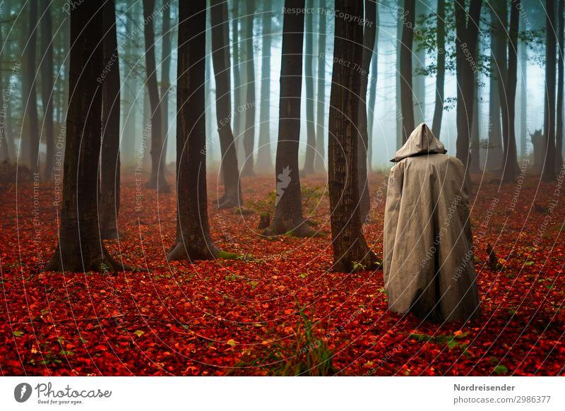 Waldgeflüster Sinnesorgane ruhig Meditation Mensch androgyn 1 Natur Landschaft Pflanze Urelemente Herbst schlechtes Wetter Nebel Regen Baum Wege & Pfade stehen