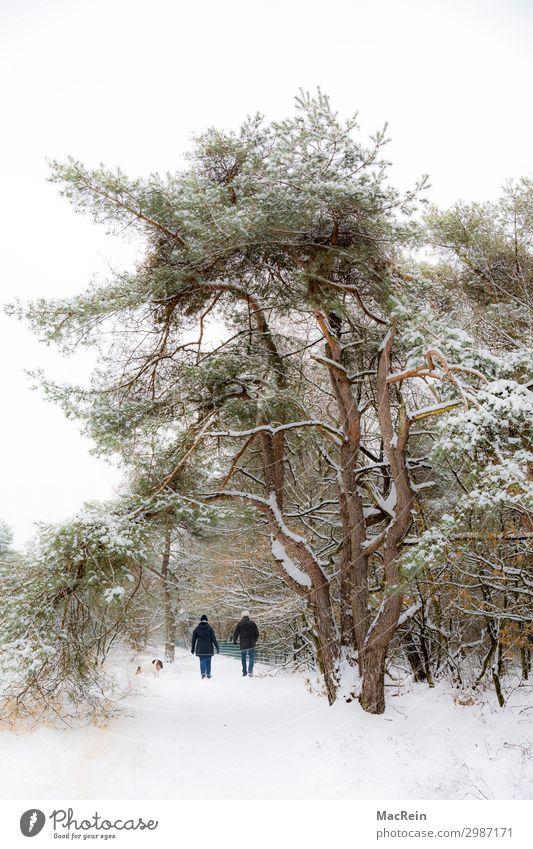 Spaziergänger in einer Winterlandschaft Mensch maskulin feminin Weiblicher Senior Frau Männlicher Senior Mann Paar 2 45-60 Jahre Erwachsene Umwelt Natur