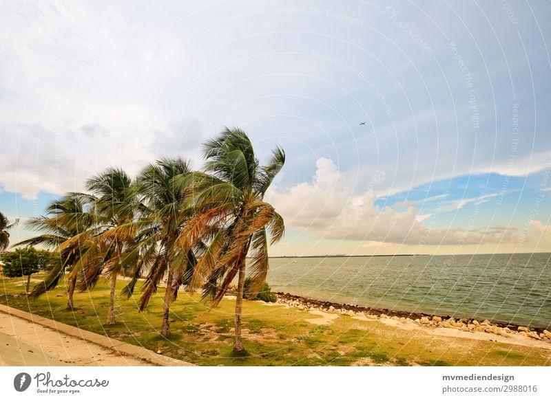Palmen Natur Sonne Meer Umwelt Sand Stimmung Wind USA Unwetter Stadtrand Florida Miami Küstenstraße Miami Beach Florida Keys