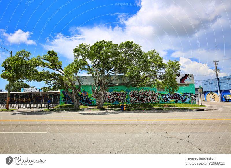 Graffiti Umwelt Natur ästhetisch Glück modern schön Baum Wynwood Walls Miami Downtown USA Florida Farbfoto