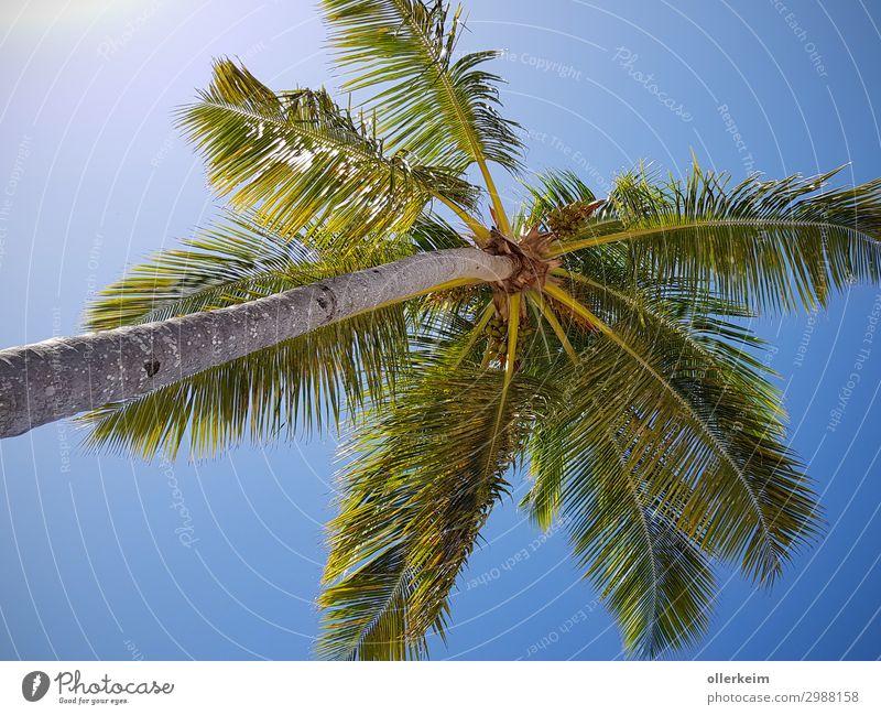 auf die Palme bringen Umwelt Natur Tier Himmel Wolkenloser Himmel Sonnenlicht Sommer Klima Wetter Schönes Wetter Wärme Pflanze Baum Grünpflanze exotisch Garten
