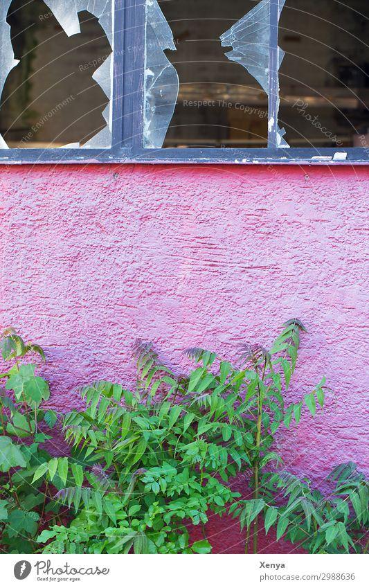 Zerbrochene Fensterscheiben einer alten Fabrik Industrieanlage Mauer Wand Fassade Glas kaputt grün rosa Zukunftsangst unbeständig Zerstörung Insolvenz