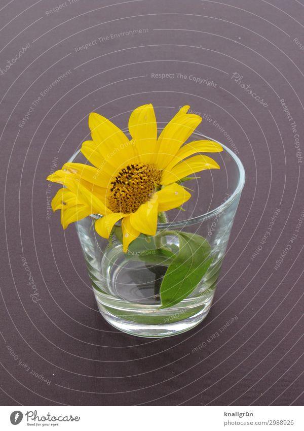 Tischdekoration Pflanze Blume Blüte Wasserglas gelb grau grün Dekoration & Verzierung Design Farbfoto Innenaufnahme Menschenleer Textfreiraum links