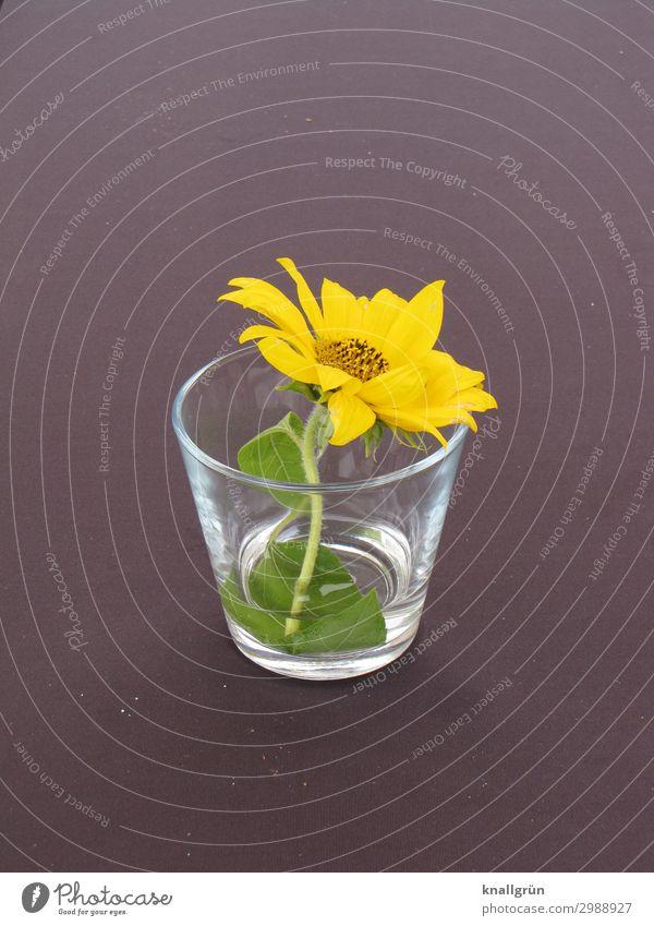 Tischdekoration Pflanze Blume Blüte Wasserglas Blühend Duft schön gelb grau grün Gefühle Romantik Natur Blumenstrauß einzeln Farbfoto Innenaufnahme Menschenleer