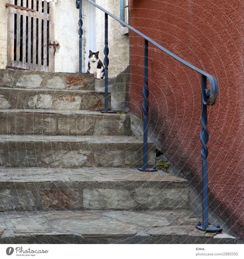 Dorftigerchen Mauer Wand Treppe Tür Treppengeländer Tor Tier Haustier Katze 1 beobachten Blick sitzen Wachsamkeit Neugier Interesse Überraschung Stress