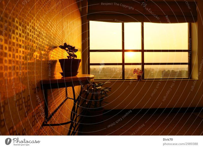 Innenarchitektur in Indien Ferien & Urlaub & Reisen Tourismus Ferne Sonne Sonnenaufgang Sonnenuntergang Sonnenlicht Schönes Wetter Topfpflanze Jamshedpur