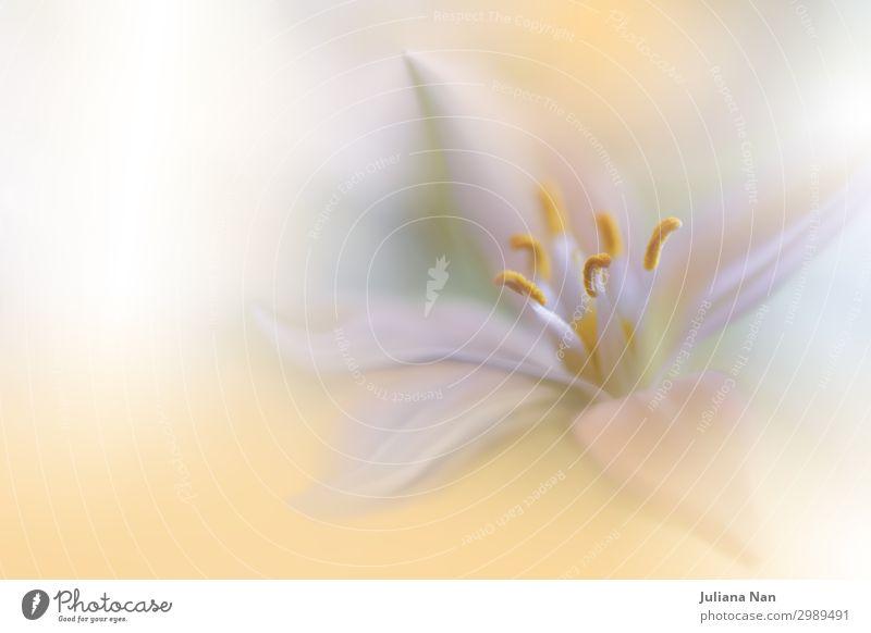 Schöne Natur Makrofotografie.Web Banner für Design.Art. Lifestyle Reichtum elegant Stil exotisch Freude Kunst Kunstwerk Umwelt Pflanze Blume Grünpflanze