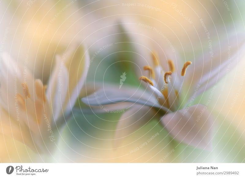 Orange Natur Makrofotografie.Blumenkunst Design.Jasmin. Lifestyle Reichtum elegant Stil exotisch Freude Kunst Kunstwerk Pflanze Liebe ästhetisch außergewöhnlich