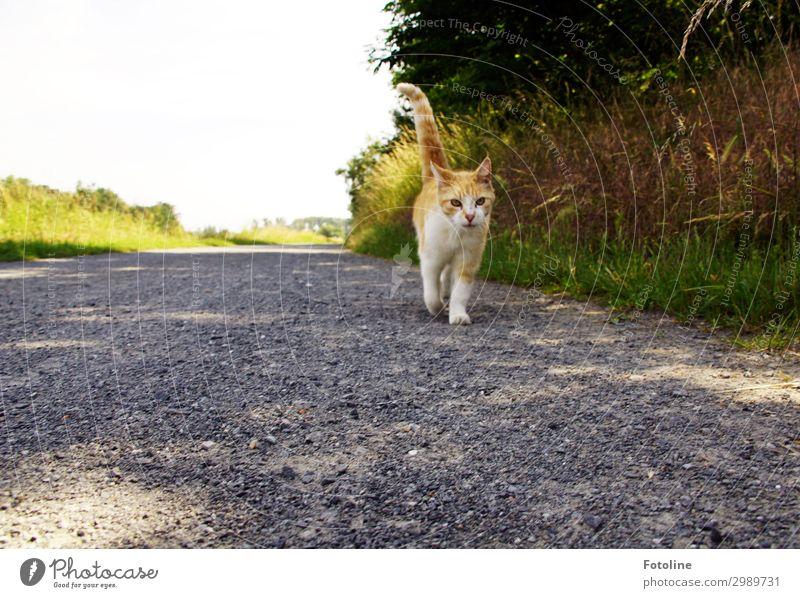 Wandertag Katze Natur Sommer Pflanze grün Landschaft Baum Tier Wärme Umwelt natürlich Wege & Pfade Wiese Gras braun grau