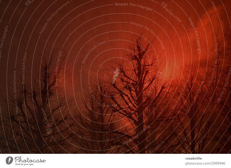 Surreal und   nebulös Himmel Landschaft rot Baum Einsamkeit Wald Winter Beleuchtung leuchten Nebel Zukunft Ast Feuer Brand Futurismus Zukunftsangst