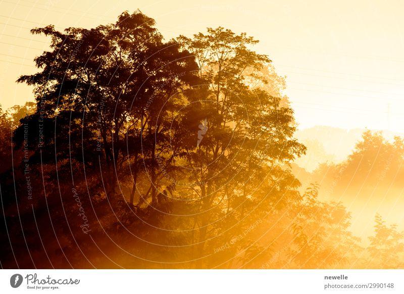Sonnenaufgang auf dem Hintergrund einer nebligen Landschaft mit Baumbestand schön Sommer Natur Herbst Nebel Blatt Park Wald dunkel hell gelb geheimnisvoll