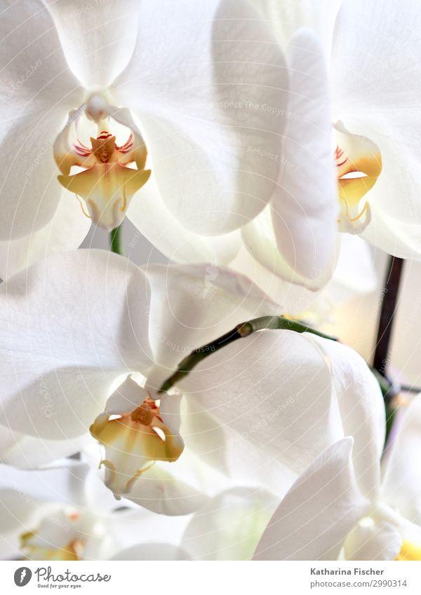 weiße Orchideenblüten Natur Sommer Pflanze Winter Herbst gelb Frühling orange Blumenstrauß