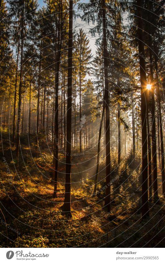 Wann wirds mal wieder Sommer :) Fitness Erholung Natur Landschaft Pflanze Urelemente Erde Klima Klimawandel Schönes Wetter Wärme Baum Gras Sträucher Moos Farn