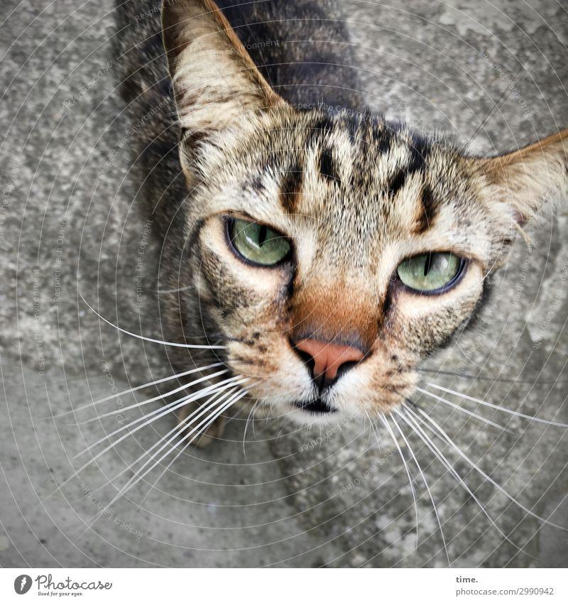 bon jour mesdamessieurs Tier Haustier Katze Tiergesicht Fell 1 beobachten Blick warten selbstbewußt Wachsamkeit geduldig Ausdauer standhaft Neugier Interesse