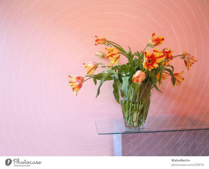 Glasvase mit Tulpen Blumenstrauß Glasscheibe Farbverlauf Stillleben Betontisch