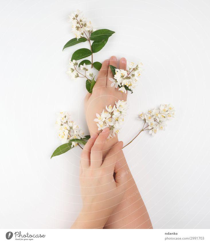 weibliche Hände und kleine weiße Blüten schön Körper Haut Maniküre Behandlung Wellness Wohlgefühl Spa Dekoration & Verzierung Feste & Feiern Frau Erwachsene