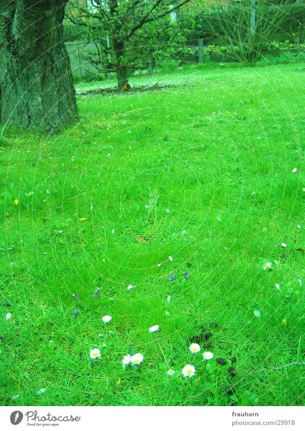 frühlingsgarten Baum Frühling Gras Garten Rasen Gänseblümchen Ferne