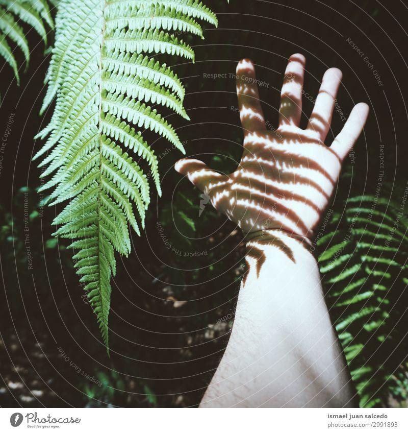 Mann Hand Schatten Silhouette Finger Handfläche Körperteil Handgelenk Arme Haut Mensch Lichterscheinung Sonnenlicht gestikulieren Entwurf Symbole & Metaphern