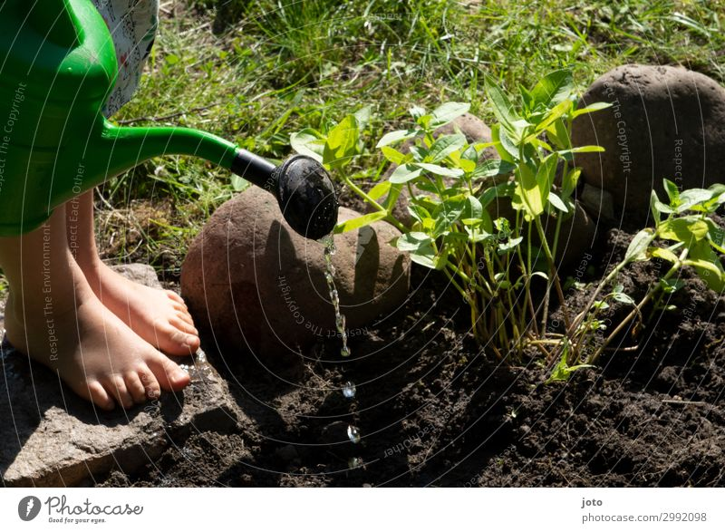 Beet gießen Kind Natur Sommer Pflanze grün Wasser Blume Umwelt Garten Fuß Stein Freizeit & Hobby Erde Wachstum Kindheit Beginn