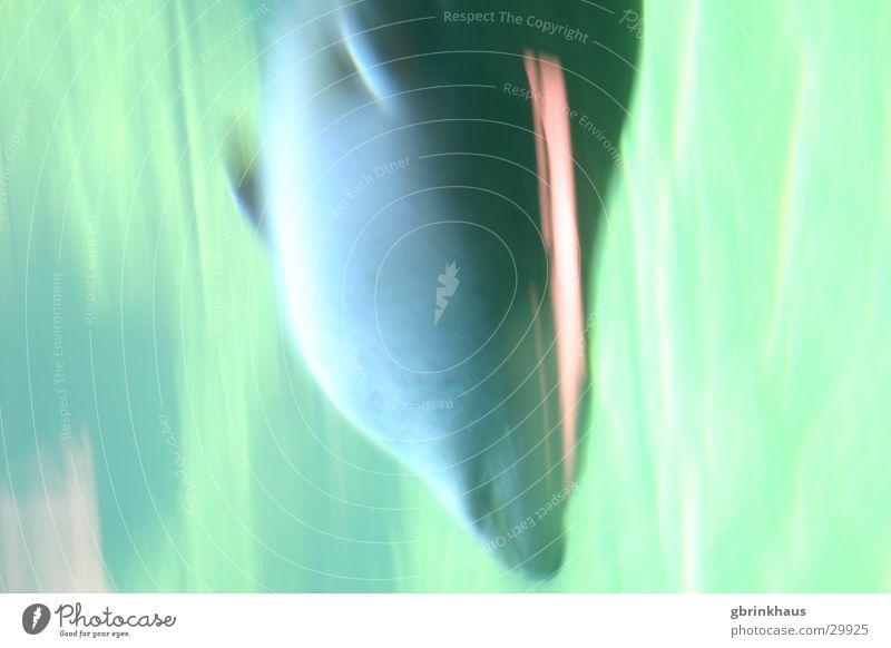 Robbenschwimmen2 Seehund Unterwasseraufnahme Fröhlichkeit Aquarium Sommer kalt Geschwindigkeit tauchen Robbbe Glück Leben genießen Sonne Speckschicht Fisch