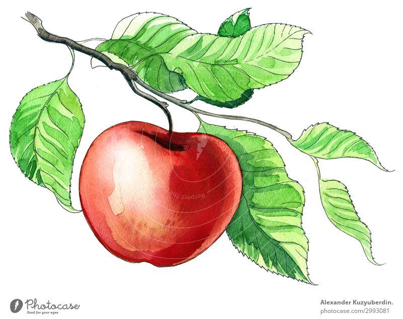 Roter Apfel Lebensmittel Frucht Ernährung Essen Frühstück Mittagessen Saft Diät Baum Ast Feldfrüchte Landwirtschaft Kunst Bild Grafik u. Illustration Zeichnung