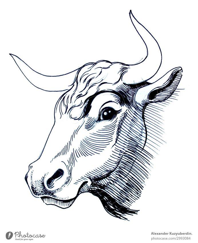Kuhkopf Tier Nutztier 1 dick authentisch natürlich schön weiß Bulle Kopf Hornsund Kunst Bild Grafik u. Illustration Zeichnung Tinte schwarz Schwarzweißfoto