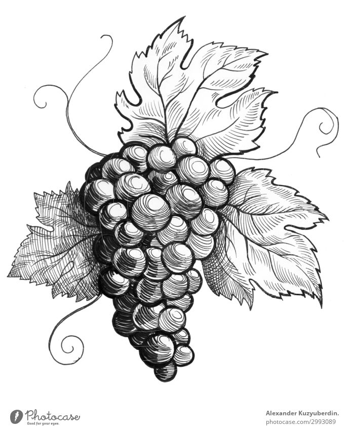 Weintraube Lebensmittel Frucht Dessert Süßwaren Ernährung Essen Diät Kunst Natur Pflanze Baum Sträucher exotisch ästhetisch Schwarzweißfoto Makroaufnahme