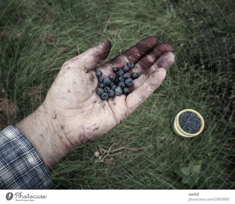 Blau machen Freizeit & Hobby Mann Erwachsene Hand 45-60 Jahre Umwelt Natur Erde Sommer Schönes Wetter Gras Blaubeeren Wald Eimer voll Gesundheit lecker viele