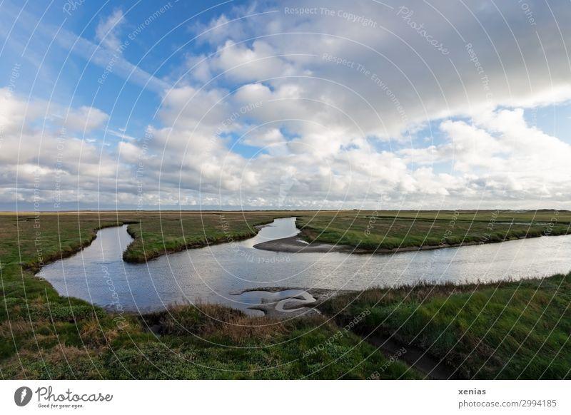 Salzwiesen Ferien & Urlaub & Reisen Sommer Natur Landschaft Tier Himmel Wolken Frühling Schönes Wetter Pflanze Gras Queller Wiese Küste Nordsee St. Peter-Ording