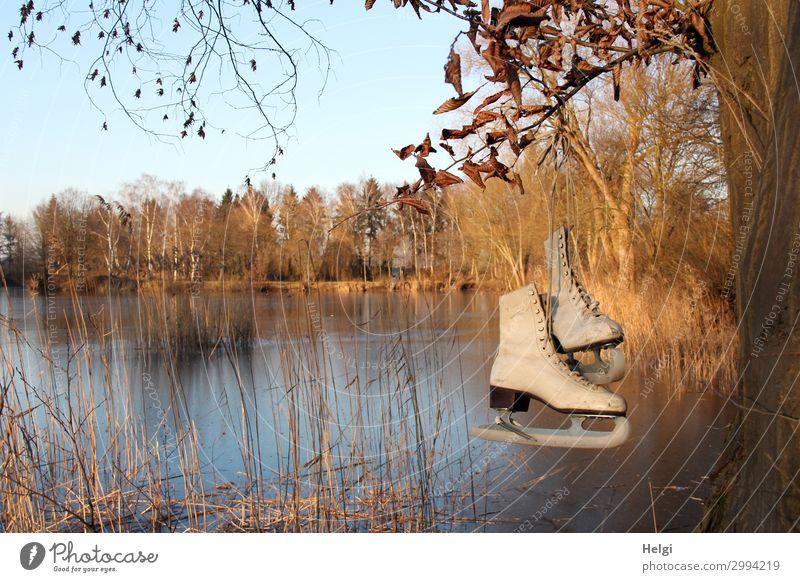 Landschaft mit gefrorenem See und historischen Schlittschuhen am Baum Sport Wintersport Umwelt Natur Pflanze Wolkenloser Himmel Eis Frost Gras Seeufer