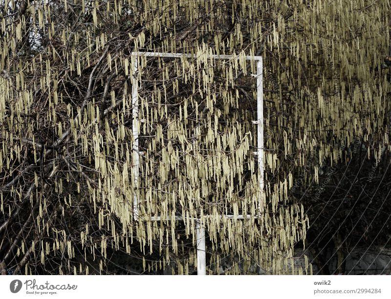 Gestellt Umwelt Natur Frühling Schönes Wetter Pflanze Baum Weide Weidenkätzchen Schilder & Markierungen Rahmen Metall stehen leer offen Rechteck Ständer