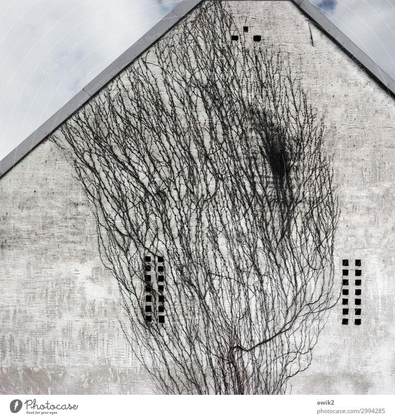 Immer an der Wand lang | Kletterwand Dorf Haus Scheune Mauer Fassade groß hoch Pflanze Kletterpflanzen Loch Himmel Wolken alt Farbfoto Gedeckte Farben