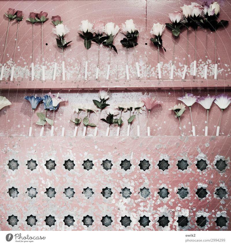 Unter Beschuss Schießbude Kunstblume Erfolg Trostpreis Loch Stern (Symbol) Metall Kunststoff alt viele verrückt Frustration gleich Ordnung Präzision Ziel