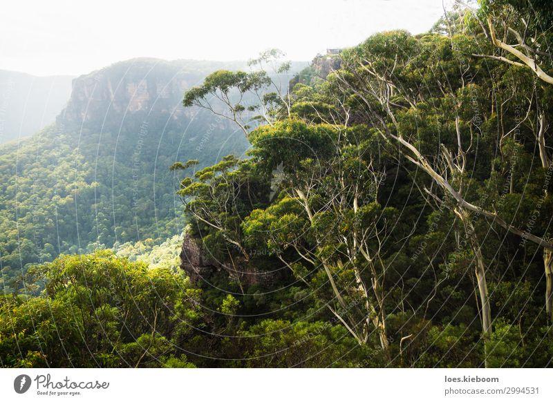Spooners lookout at the Blue Mountains, Katoomba, Australia Erholung ruhig Ferien & Urlaub & Reisen Tourismus Sightseeing Sommer wandern Natur Landschaft Park
