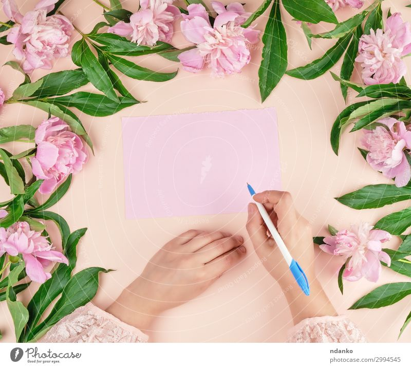 Frau Natur Pflanze schön grün Hand Blume Blatt Lifestyle Erwachsene Liebe Blüte Feste & Feiern Business rosa oben