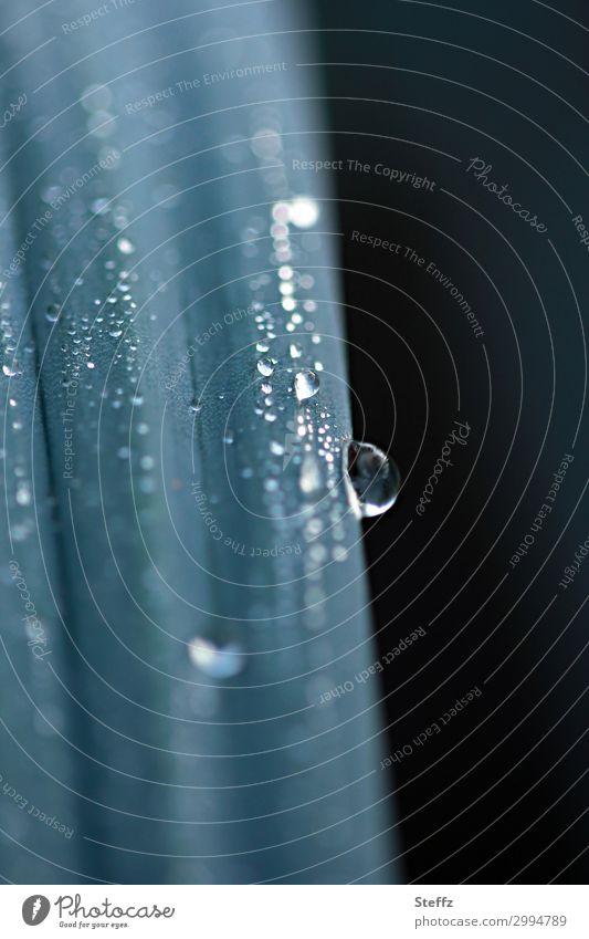slow motion ruhig Meditation Umwelt Natur Wasser Wassertropfen Regen Pflanze Gras Wildpflanze Halm natürlich schön grün silber Stimmung achtsam Wachsamkeit