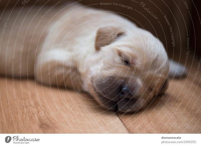 Hallo Welt! Hund weiß Tier schwarz Gesundheit Tierjunges Holz Glück klein braun Stimmung Zufriedenheit träumen liegen authentisch niedlich