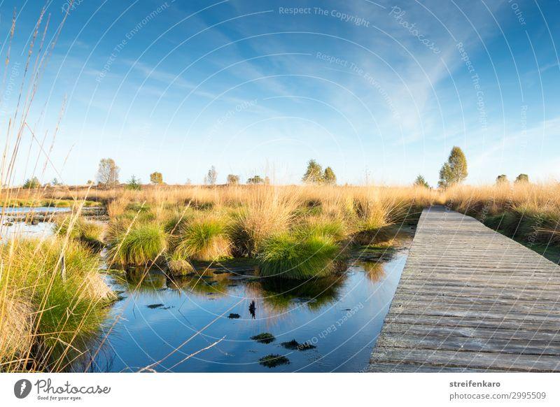 Morgenstille Umwelt Natur Landschaft Pflanze Wasser Himmel Sonne Frühling Schönes Wetter Moor Hochmoor Hohes Venn ästhetisch außergewöhnlich Unendlichkeit