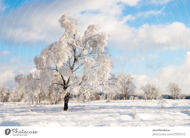 Wintersonne wandern Schnee Umwelt Natur Landschaft Pflanze Urelemente Wasser Himmel Wolken Schönes Wetter Eis Frost Baum Moor Sumpf Hochmoor Hohes Venn Erholung