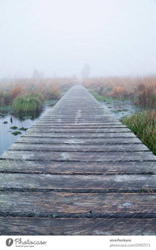 Nebel im Hohen Venn wandern Umwelt Natur Landschaft Wasser Herbst Belgien Holz einfach natürlich Stimmung Sicherheit Gelassenheit ruhig Einsamkeit Unendlichkeit